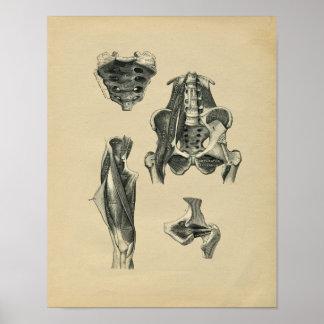 Impresión humana 1902 del vintage de la anatomía impresiones