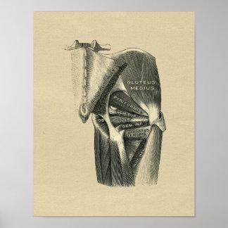 Impresión humana 1902 del vintage de la anatomía póster