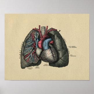 Impresión humana 1902 del vintage del corazón y de póster