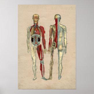 Impresión humana de la anatomía 1841 del corazón póster