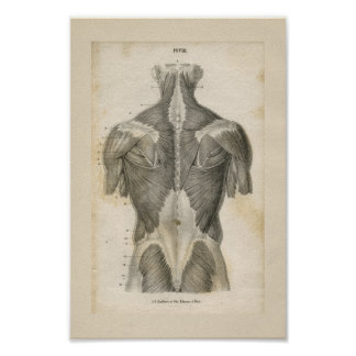 Impresión humana de la anatomía del vintage del póster