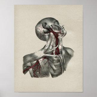 Impresión humana del vintage de la anatomía del impresiones
