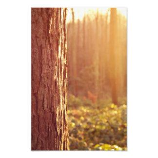 Impresión ideal de la fotografía del bosque impresion fotografica