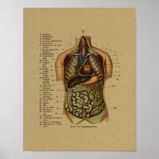 Impresión interna alemana de la anatomía de póster