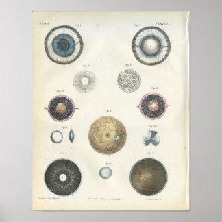 Impresión interna de la anatomía del ojo humano póster