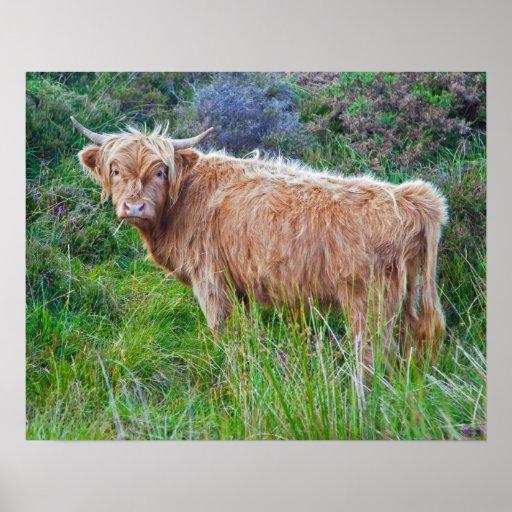 Impresión joven de la vaca de la montaña