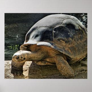 impresión lenta y constante de la tortuga impresiones