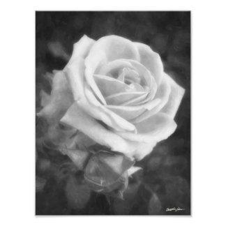 Impresión ligera monocromática del rosa fotografía