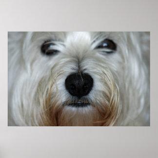 Impresión linda de la lona de Westie Póster