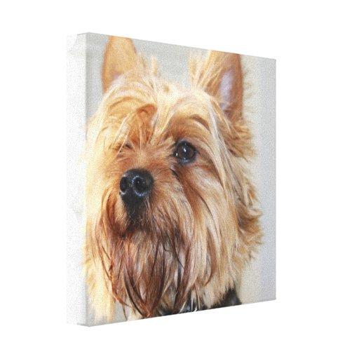 Impresión linda de la lona de Yorkshire Terrier Impresión De Lienzo