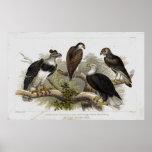 Impresión litográfica antigua de Eagle Impresiones