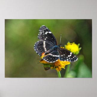 Impresión: Mariposa confinada #3 del remiendo Poster