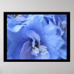 Impresión moderna de la flor azul posters