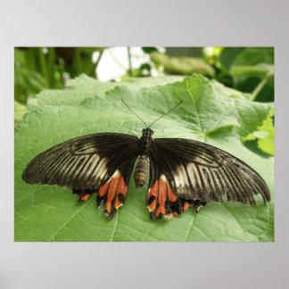 Impresión negra bonita de la mariposa del rojo y póster