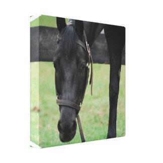 Impresión negra de la lona del caballo lona envuelta para galerias