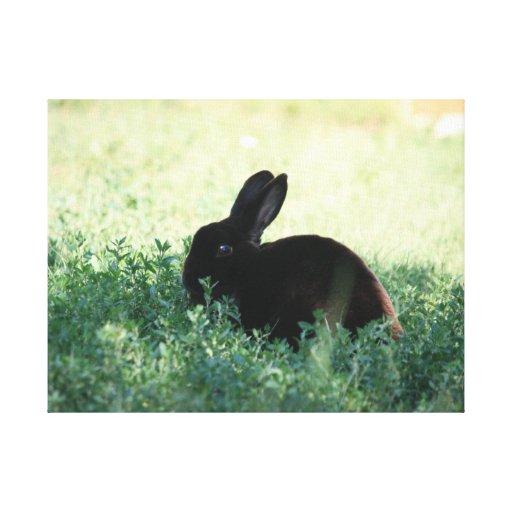 Impresión negra de la lona del conejito de Lil