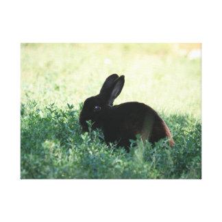 Impresión negra de la lona del conejito de Lil Lienzo Envuelto Para Galerías