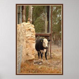 impresión negra de la vaca de Holstein con la fron
