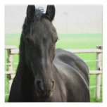 Impresión negra del poster del caballo de Freisian