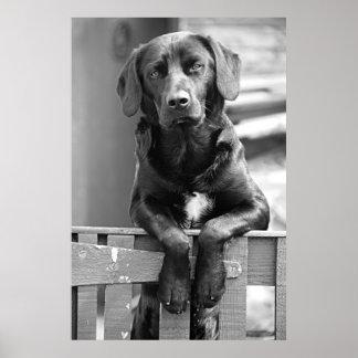 Impresión negra del poster del perro de Labrador