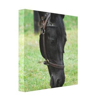 Impresión negra dulce de la lona del caballo impresión en lona estirada