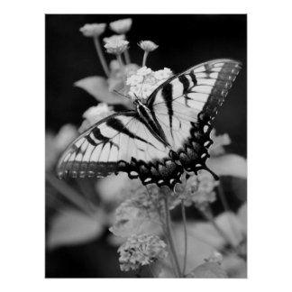 Impresión negra y blanca de la mariposa de monarca póster