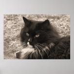 Impresión negra y blanca del gato de la muñeca de  impresiones