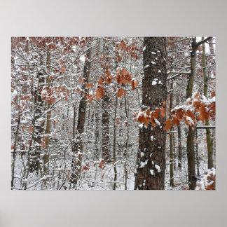 Impresión nevada de los robles póster