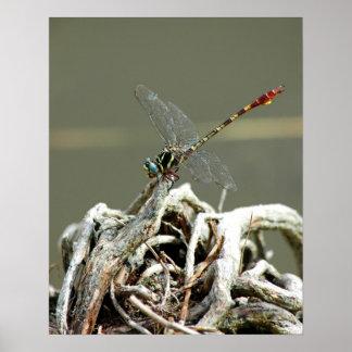 Impresión observada azul de la libélula