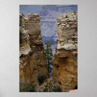 Impresión ocultada Gran Cañón del árbol 4822