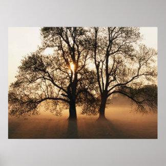 IMPRESIÓN - oro grande de la sepia de 2 árboles Impresiones