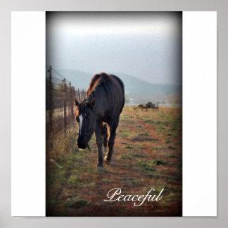 Impresión pacífica del caballo impresiones