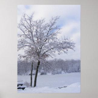 Impresión pegajosa del ~ de la nieve 24 poster