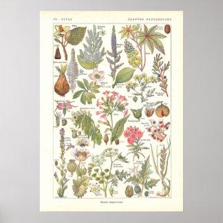Impresión peligrosa mortal de las plantas en franc poster