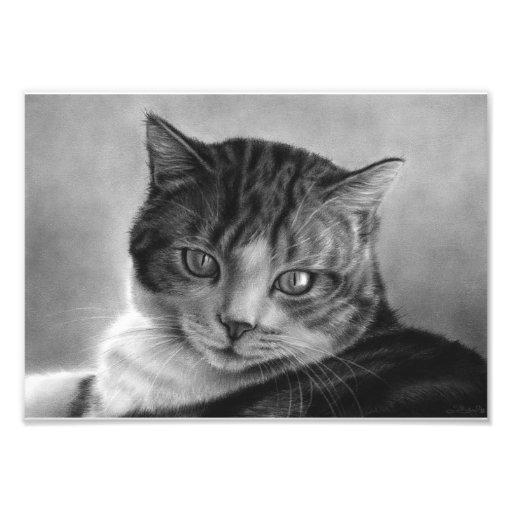 Impresión perezosa de la foto del gato de las tard