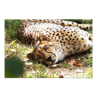 Impresión perezosa del guepardo fotografía