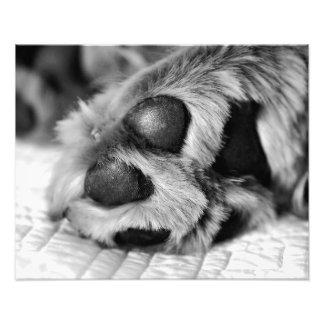 Impresión polar de la foto del perro de las patas