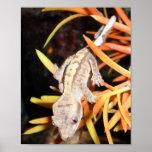 Impresión/poster Crested bebé del Gecko Póster