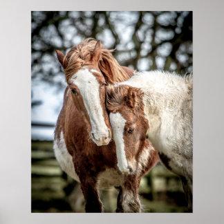Impresión/poster de los caballos póster