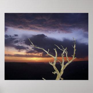 Impresión - puesta del sol del Gran Cañón Poster
