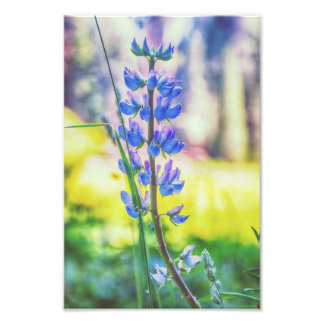 Impresión púrpura de la foto de la flor el | cojinete