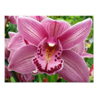 Impresión púrpura de la foto de la orquídea