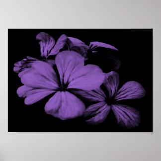 Impresión púrpura de las flores poster