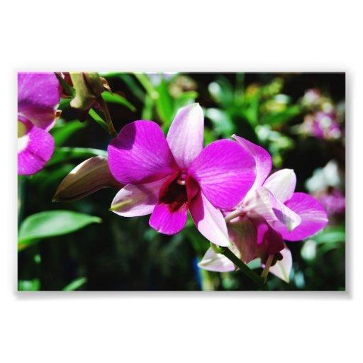 Impresión púrpura tropical de la orquídea fotografías