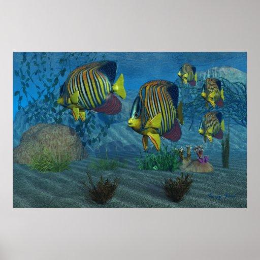Impresión real del Angelfish Póster