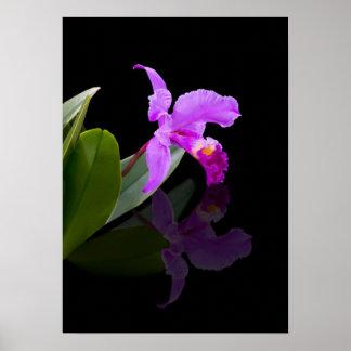 Impresión reflejada de la orquídea de la belleza impresiones