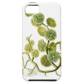 Impresión retra hermosa de la planta de la alga funda para iPhone 5 tough