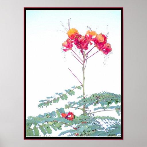 Impresión roja de la ave del paraíso póster