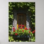 Impresión roja de la caja de ventana del geranio poster