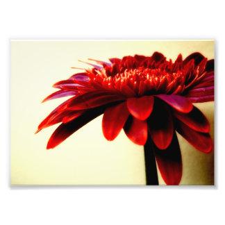 Impresión roja de la foto de la flor del Gerbera